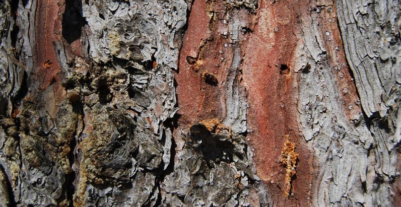 короед жрет дерево