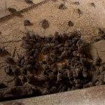 эффективный клей от тараканов